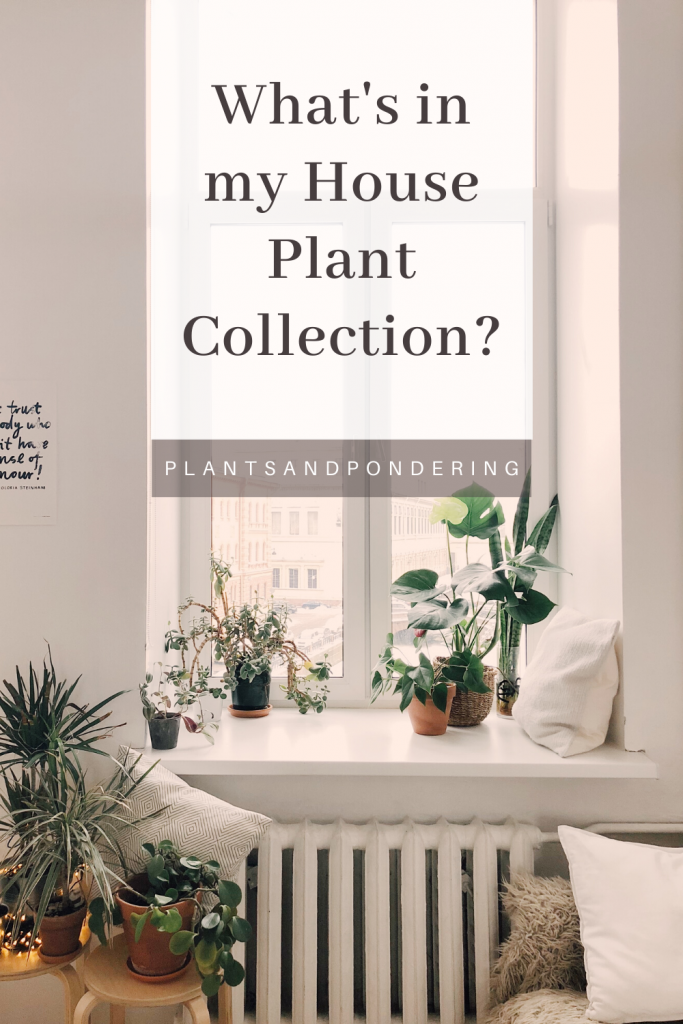 pinterest graphic for my plant collection february 2020