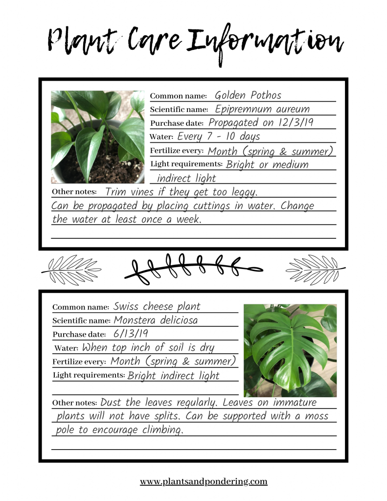 example of a completed plant care information sheet