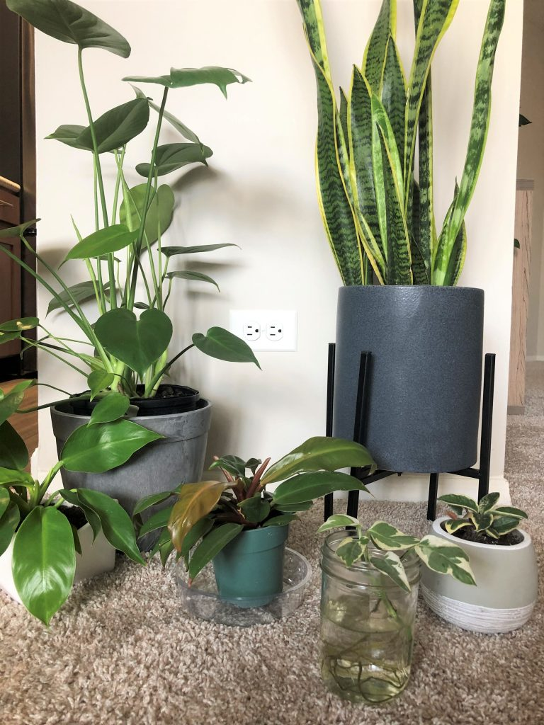 new plants in my collection as of august 2020