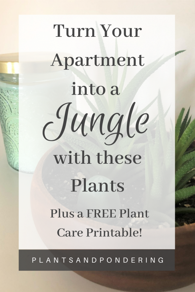 pinterest graphic for plant collection august 2020