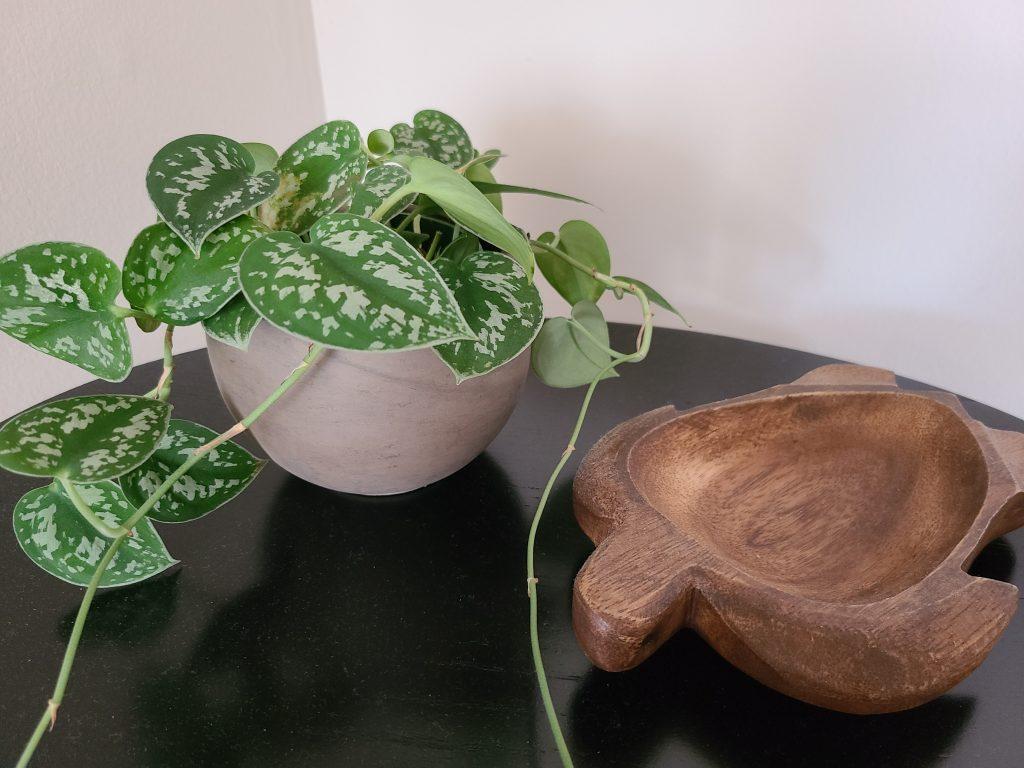 photo of scindapsus pictus plants