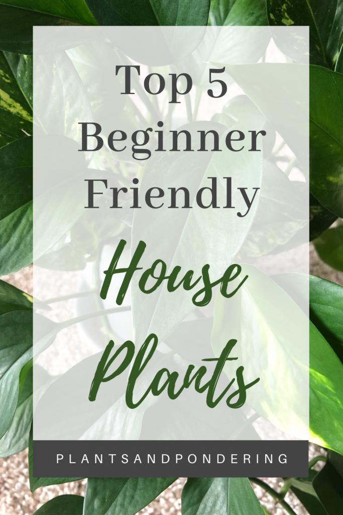 pinterest graphic for top 5 beginner friendly plants